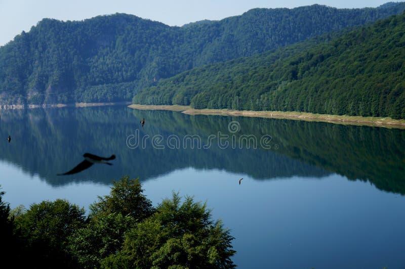Il lago Vidraru in montagne di Fagaras della Romania immagine stock libera da diritti