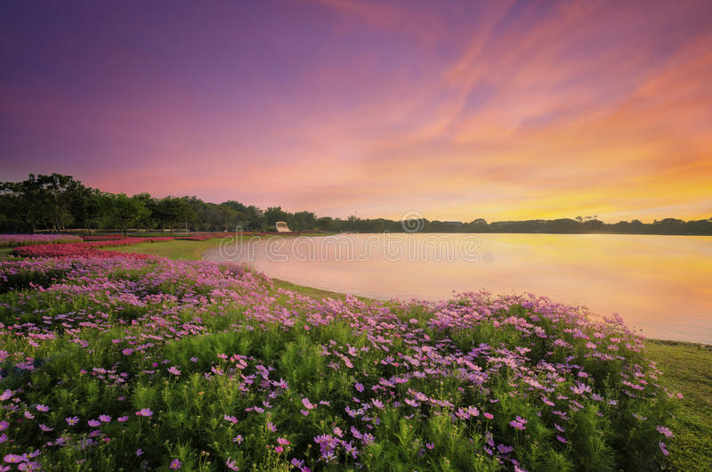 Il LAK ed i fiori in parco pubblico immagine stock libera da diritti