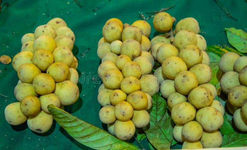 Il lansium domesticum o Longkong è i frutti tropicali tailandesi fotografia stock libera da diritti