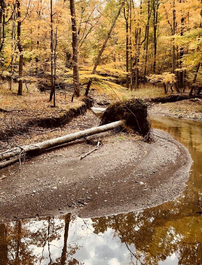 Il lato naturale di Parma rustica, Ohio - U.S.A. - OHIO fotografie stock libere da diritti