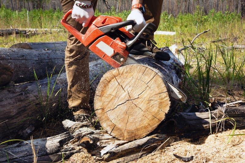 Il lavoratore del boscaiolo sta tagliando la legna da ardere con una motosega professionale fotografie stock