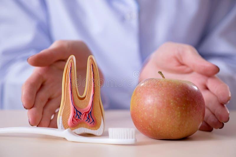 Download Il Lavoro Di Pratica Del Dentista Sul Modello Del Dente Immagine Stock - Immagine di dentista, igiene: 117977347