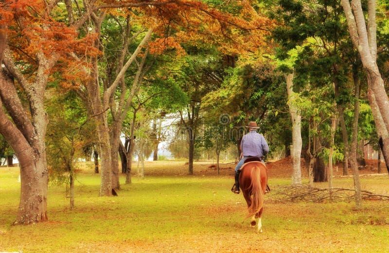 Il legame fra un uomo e un cavallo fotografia stock