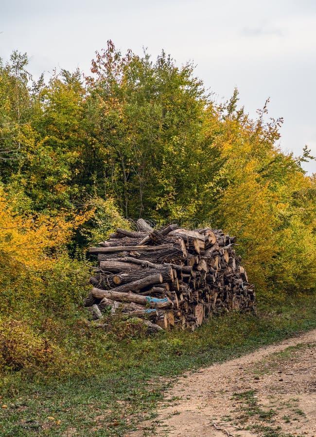 Il legname di legno dei ceppi ha impilato - il san Germain Forest, Francia immagini stock