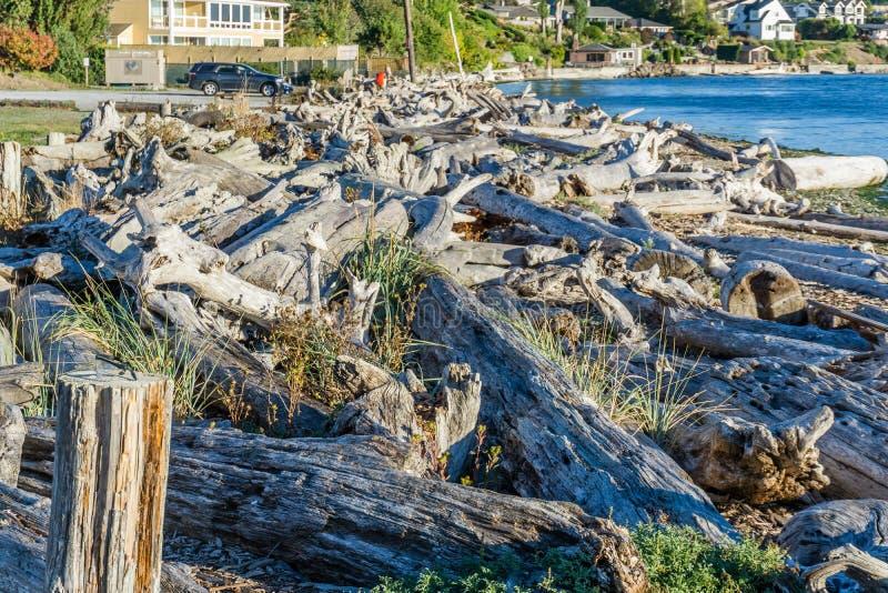 Il legname galleggiante della linea costiera accatasta 3 fotografia stock