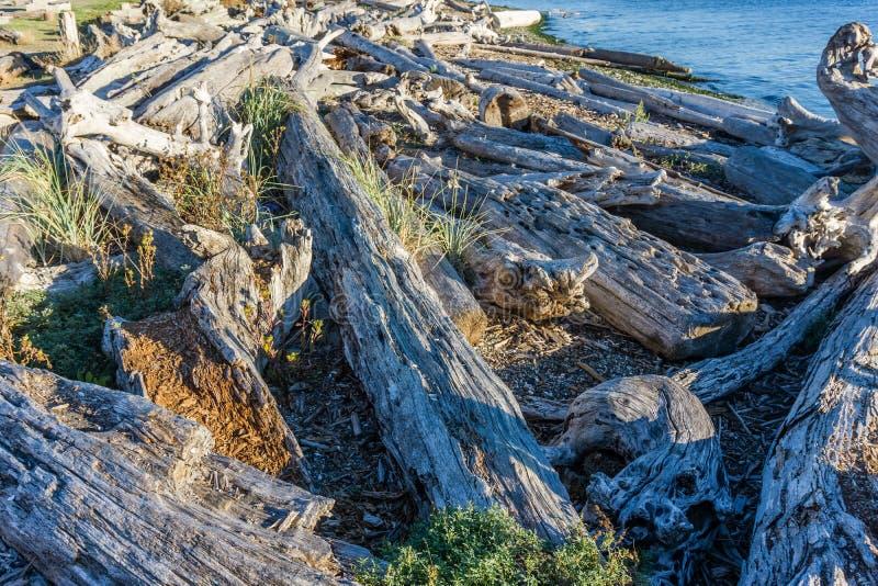 Il legname galleggiante della linea costiera accatasta 4 fotografie stock