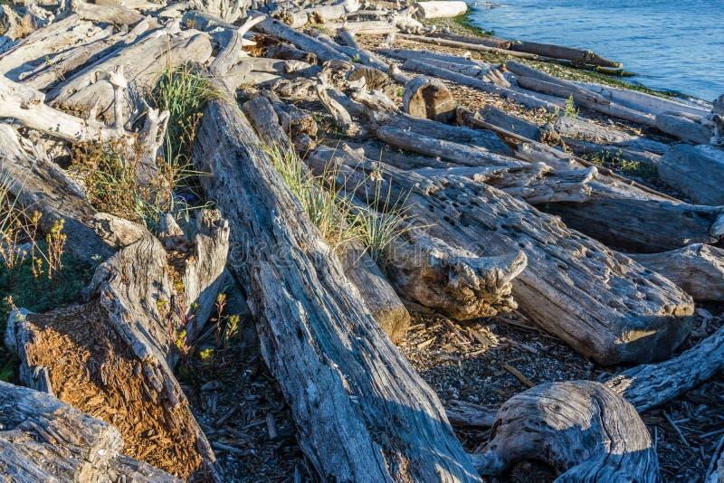 Il legname galleggiante della linea costiera accatasta 5 immagini stock