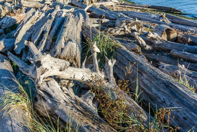 Il legname galleggiante della linea costiera accatasta 6 fotografie stock libere da diritti