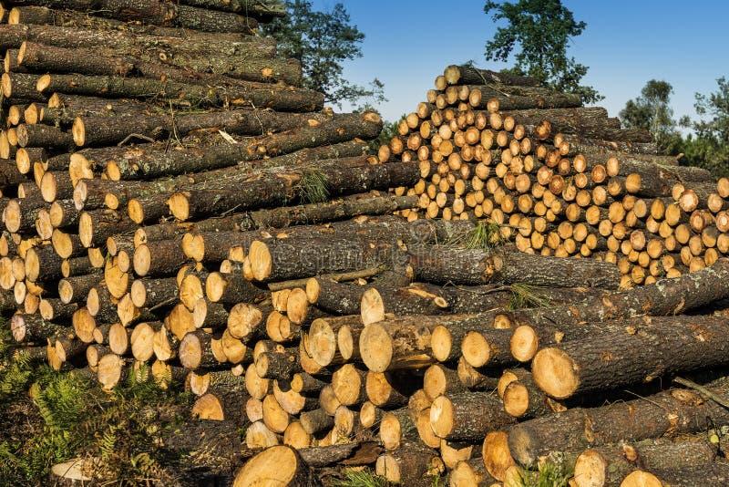 Il legno collega la foresta fotografie stock libere da diritti