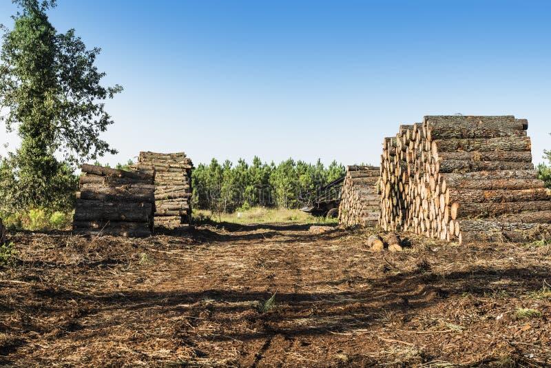Il legno collega la foresta immagini stock libere da diritti