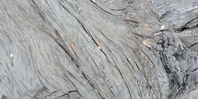 Il legno con struttura, natura abbellisce, Lakhnadon India, immagine presa febbraio 2018, fondo dei paesaggi immagini stock