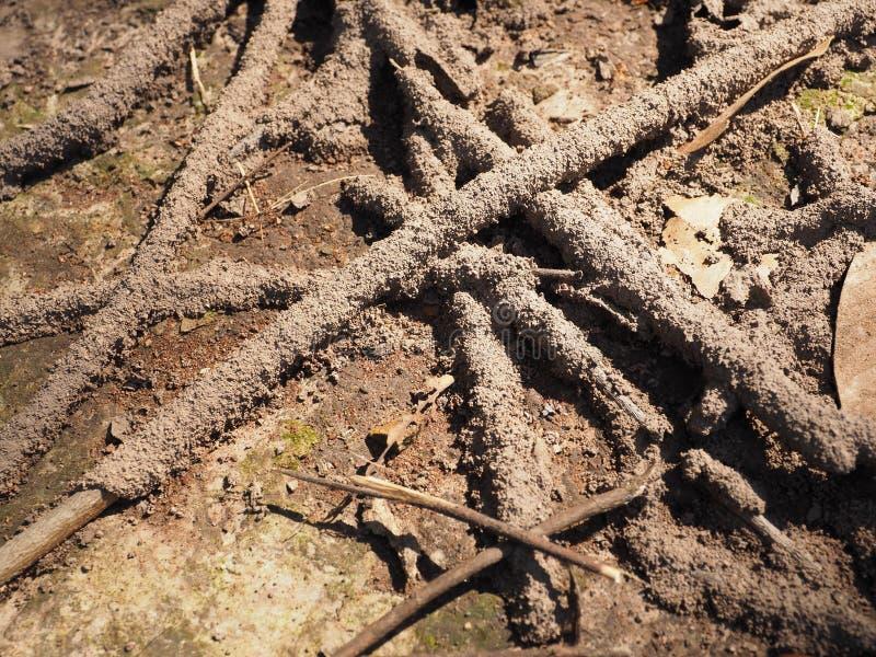 Il legno di danno della termite mangia il nido distrugge fotografia stock libera da diritti