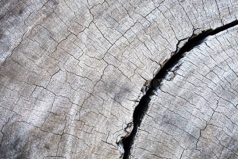 Il legno duro fende il fondo strutturato per progettazione e tutte le ispirazioni creative fotografie stock libere da diritti