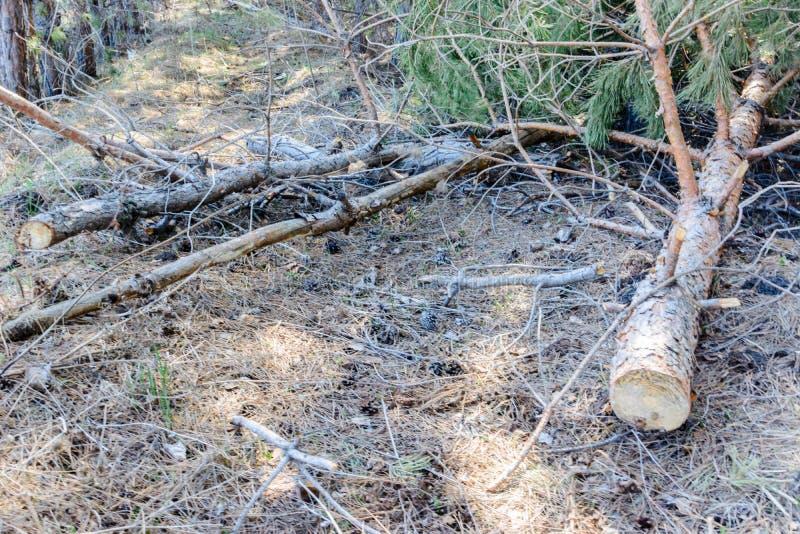 Il legno ha abbandonato dopo il taglio Disboscamento illegale L'influenza dell'uomo sull'ambiente Problemi ambientali Warmi globa fotografia stock libera da diritti