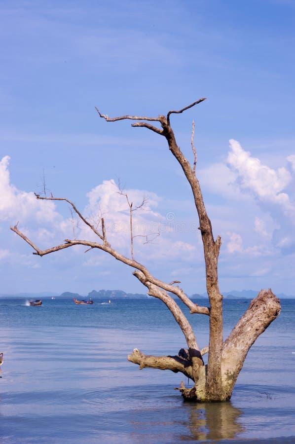 Il legno rimane nel mare alla Tailandia fotografia stock libera da diritti