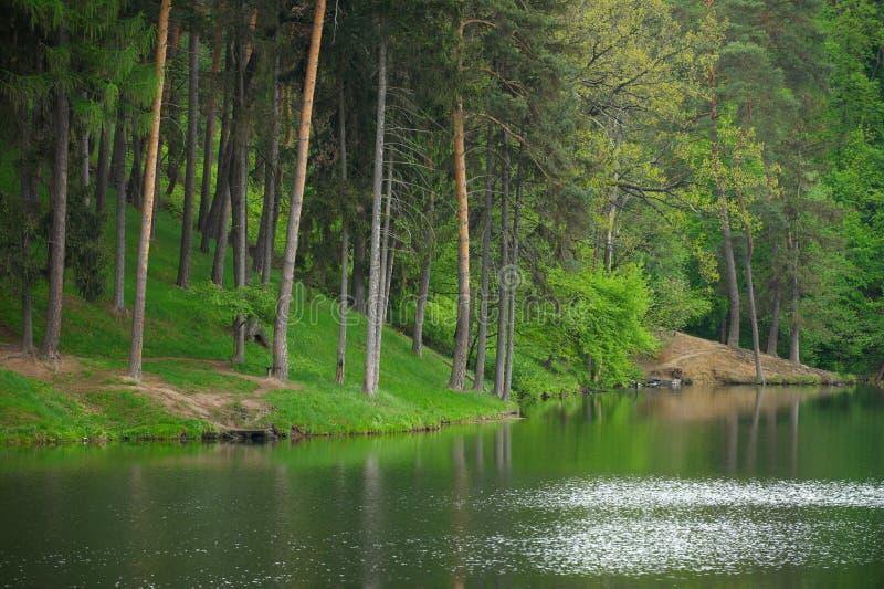 Il legno selvaggio conifero della riflessione di specchio del lago e dell'abetaia abbellisce il tempo lunatico fotografia stock