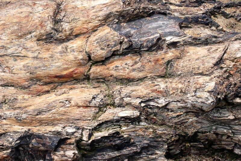 Il legno silicated fotografia stock libera da diritti