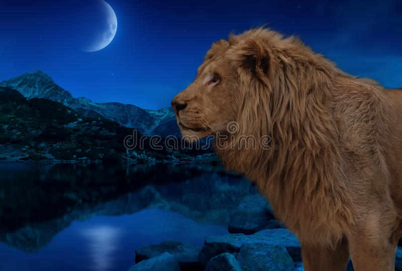 Il leone nel lago di notte sotto la luna e le stelle wallpaper fotografia stock