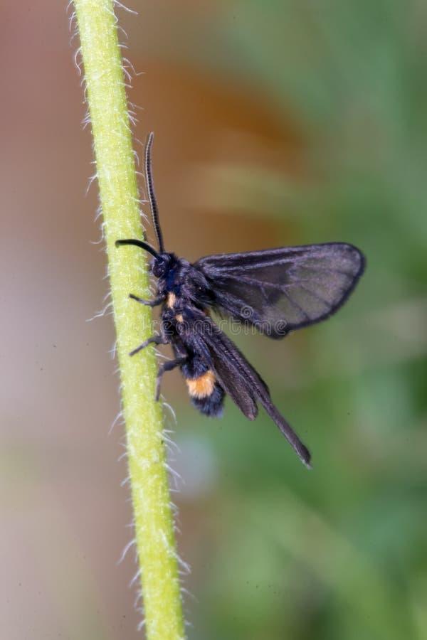 Il lepidottero è sul fiore in giardino fotografie stock libere da diritti