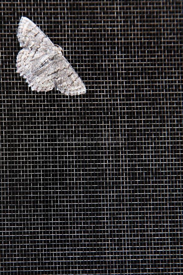 Il lepidottero sopra flyscreen fotografia stock libera da diritti