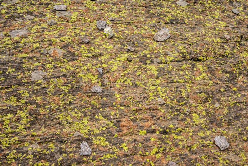 Il lichene ha coperto la roccia immagine stock