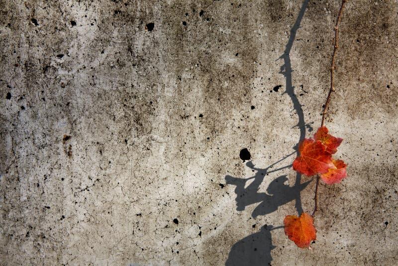 Il limite dell'edera fotografia stock
