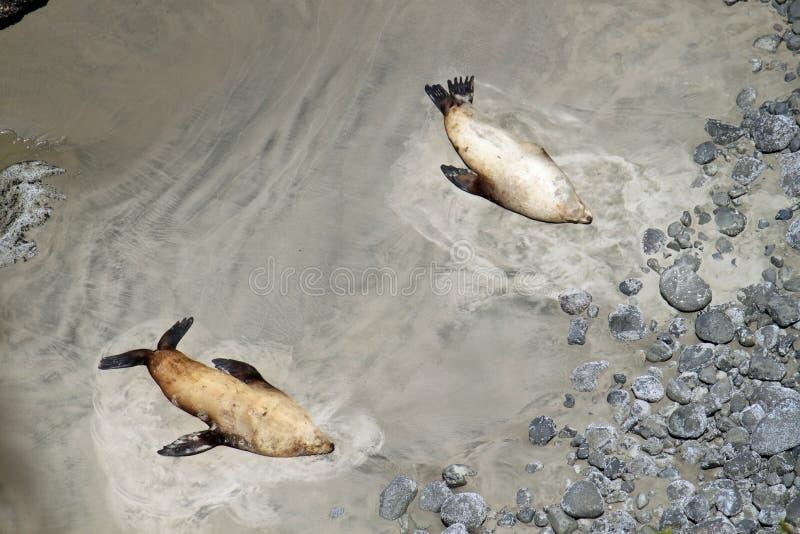 Il litorale dell'Oregon fotografia stock libera da diritti