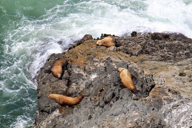 Il litorale dell'Oregon immagini stock libere da diritti