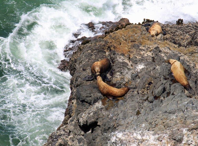 Il litorale dell'Oregon fotografie stock