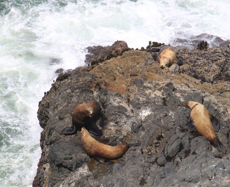 Il litorale dell'Oregon fotografie stock libere da diritti