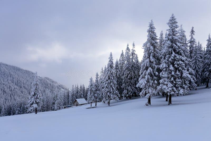 Il livello sulle montagne nella foresta coperta di neve là è vecchia capanna di legno sola fotografia stock libera da diritti
