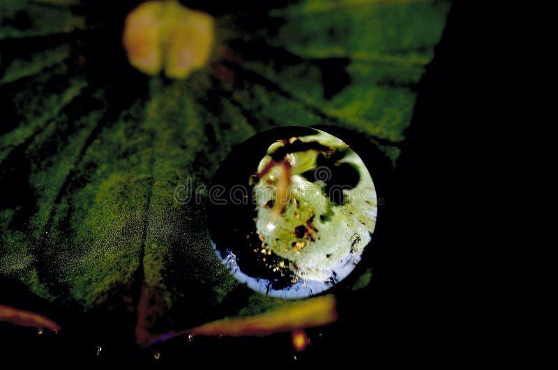 Il loto lascia il globo no2 fotografia stock libera da diritti
