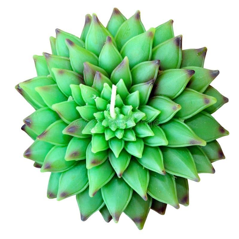 Il loto verde ha isolato immagini stock libere da diritti