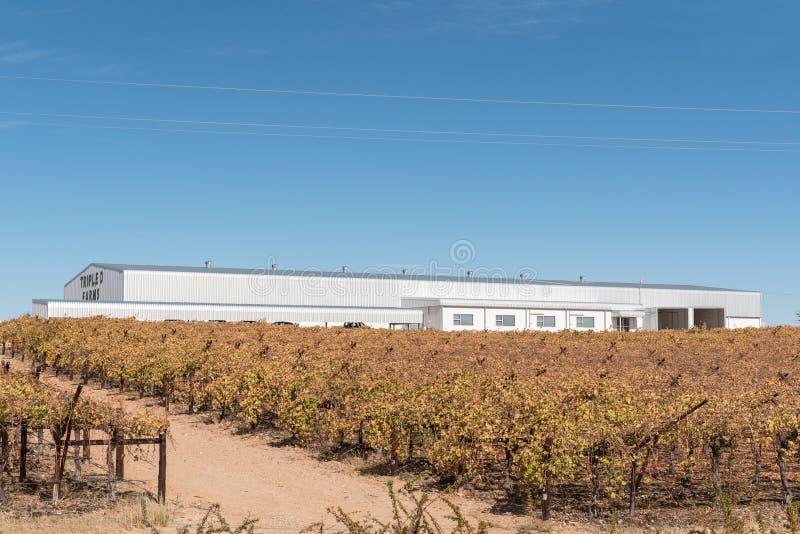 Il magazzino e le vigne di Tripple D coltiva in Kakamas fotografia stock
