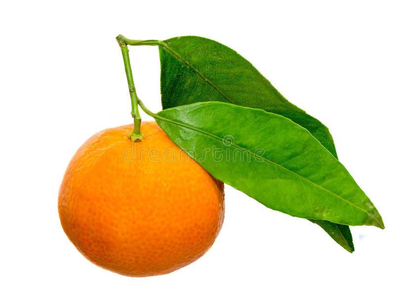 Il mandarino (citrus reticulata), anche conosciuto come il mandarino o il mandarino, fondo isolato e bianco immagine stock libera da diritti
