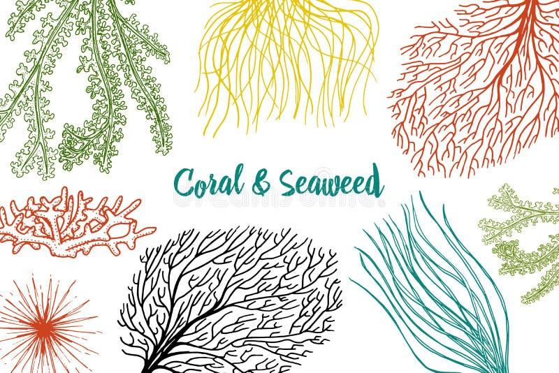 Il marinaio pianta il fondo dell'alga vita di verdure ed alimento per il pesce inciso disegnato a mano nel vecchio schizzo, stile illustrazione di stock