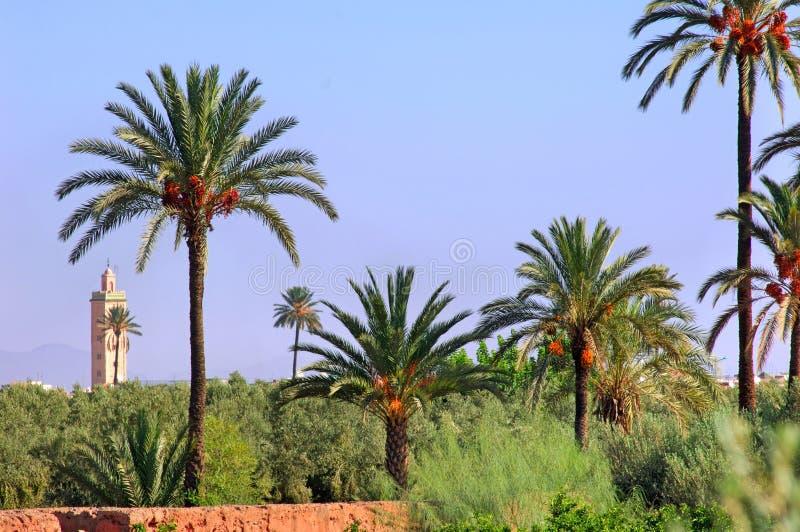 Il Marocco, Marrakesh: palme fotografie stock libere da diritti