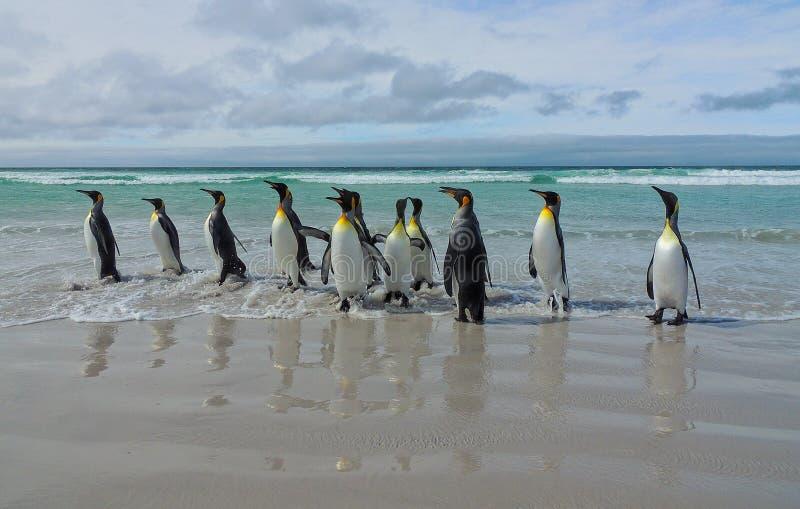 Il marzo del re Penguins fotografie stock libere da diritti