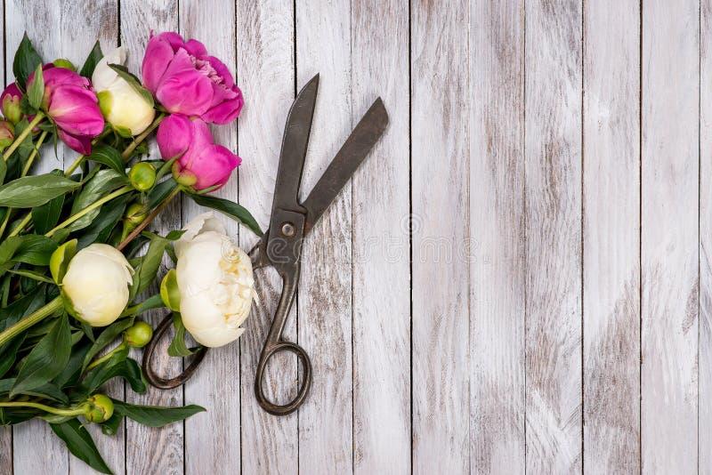 Il mazzo dei fiori bianchi e rosa delle peonie e delle forbici d'annata su bianco ha dipinto le plance di legno Vista superiore fotografie stock libere da diritti