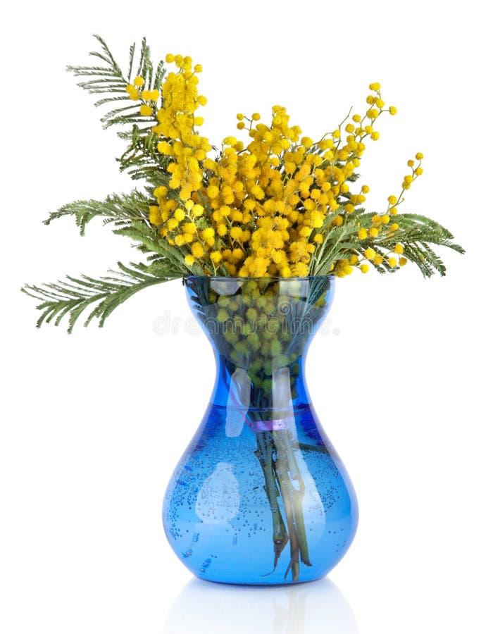 Il mazzo dell'acacia gialla della mimosa fiorisce in vaso di vetro blu immagini stock