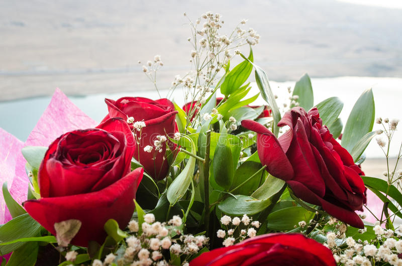 Il mazzo delle rose si chiude in su Priorità bassa vaga Fuoco selettivo Fondo floreale della cartolina d'auguri o del modello Maz fotografie stock