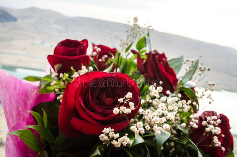 Il mazzo delle rose si chiude in su Priorità bassa vaga Fuoco selettivo Fondo floreale della cartolina d'auguri o del modello Maz fotografie stock libere da diritti
