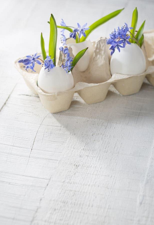 Il mazzo di molla in anticipo fiorisce (siberica di Scilla) in gusci d'uovo fotografia stock libera da diritti