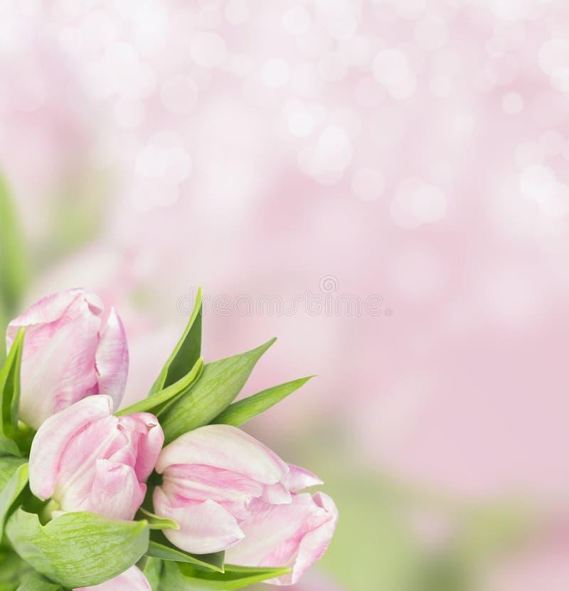 Il mazzo di tulipani rosa imbarca sul fondo del bokeh immagini stock libere da diritti