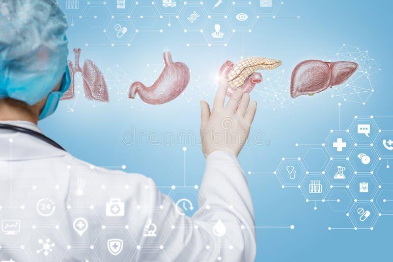 Il medico clicca il pancreas fotografie stock
