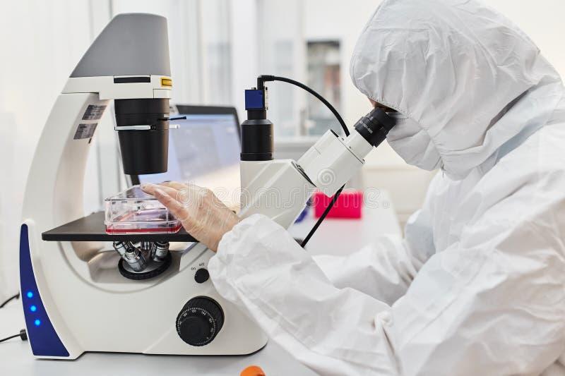 Il medico esamina il microscopio Il medico conduce la ricerca fotografie stock