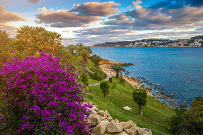 Il-Mellieha, Malta - Beautiful flowers and a sunset scene with Mellieha town. Palm trees and colorful sky and clouds royalty free stock photo