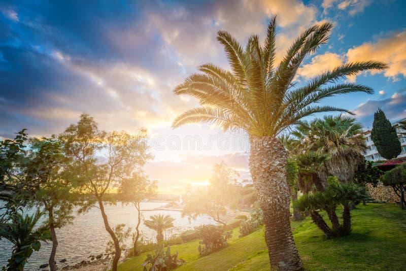 IL-Mellieha, Malta - escena hermosa de la puesta del sol en la ciudad de Mellieha con las palmeras imagenes de archivo