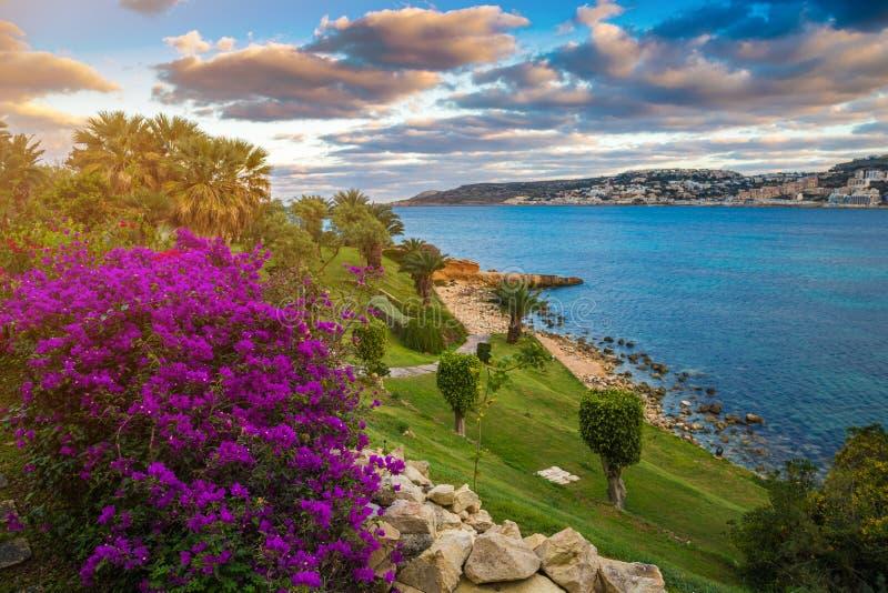 IL-Mellieha, Malta - flores hermosas y una escena de la puesta del sol con la ciudad de Mellieha foto de archivo libre de regalías