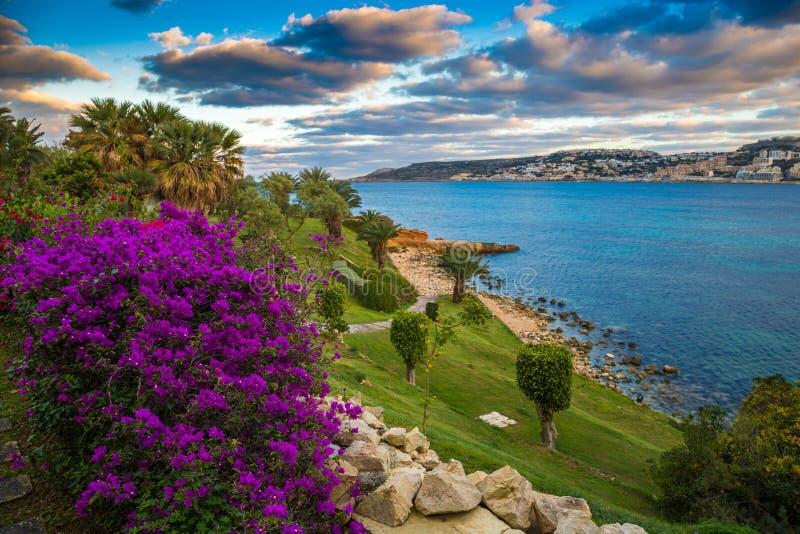 IL-Mellieha, Malta - schöne Blumen und eine Sonnenuntergangszene mit Mellieha-Stadt, Palmen und buntem Himmel stockfoto